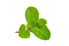 Fresh mint herb on white background Royalty Free Stock Images