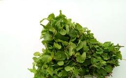 Fresh Mint herbal refreshment plant leaves Stock Photos