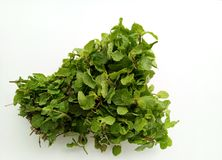 Fresh Mint herbal refreshment plant leaves Royalty Free Stock Image