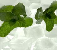 Fresh mint with ice Stock Photos