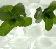 Fresh mint with ice Stock Photos