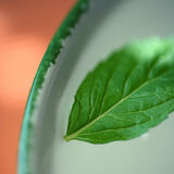 Fresh mint infusion Stock Image