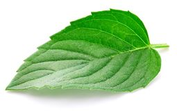 Fresh mint Clipping Path royalty free stock images