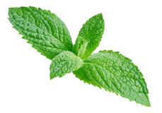 Fresh mint isolated Clipping Path stock photo