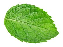 Fresh mint isolated Clipping Path royalty free stock image