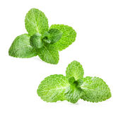 Fresh mint Stock Photos