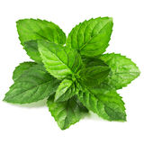 Fresh mint Royalty Free Stock Images