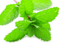 Fresh mint isolated on white royalty free stock photography