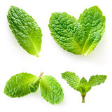 Fresh mint isolated on a white. Collection Stock Photos