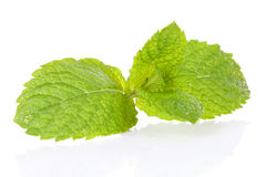 Fresh mint leaf in closeup Stock Photography