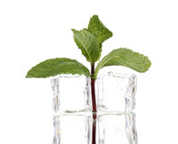 Fresh mint leaf and ice cubes Royalty Free Stock Photo