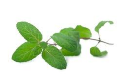 Fresh mint leaf isolated Stock Photo
