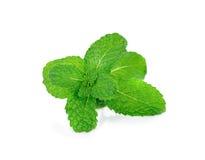 Fresh mint leaf isolated on white background Royalty Free Stock Photo