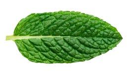 Fresh mint leaf isolated on white background,  macro. Fresh mint leaf isolated on white background, macro Royalty Free Stock Photo