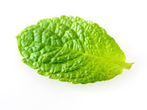 Fresh mint leaf isolated on white. Studio. Macro Stock Images