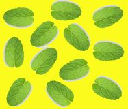 Fresh mint leaf isolated on yellow background, top view. Mint is herb royalty free stock image