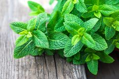 Fresh mint leaf, lemon balm herb on wooden background with copys. Pace, close up. Mint plant Royalty Free Stock Photo