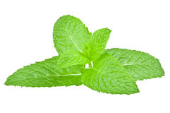 Fresh mint leaf over white background Royalty Free Stock Image