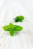 Fresh mint leaf Stock Image
