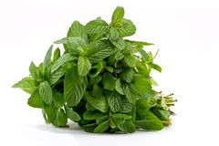Fresh mint leafs. Closeup of various fresh mint leafs Royalty Free Stock Image