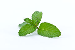Fresh mint leafs Royalty Free Stock Image