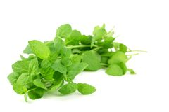 Fresh mint leaves Stock Images