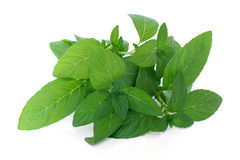 Fresh mint leaves Royalty Free Stock Photography