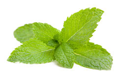 Fresh mint leaves. A sprig of fresh mint leaves isolated on white Royalty Free Stock Photo