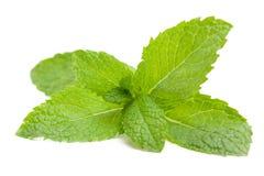 Fresh mint leaves royalty free stock photo