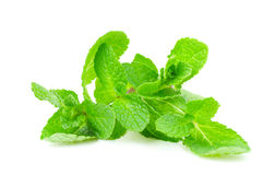 Fresh mint leaves Royalty Free Stock Images