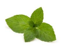 Fresh mint leaves Stock Photos