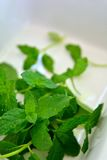 Fresh mint leaves. In a bowl Royalty Free Stock Photos