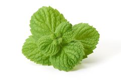Fresh mint leaves, close-up, isolated on white background.  royalty free stock photography