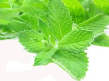 Fresh mint leaves with flowers Stock Image
