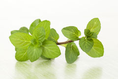 Fresh mint leaves. Royalty Free Stock Photos