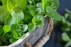 Fresh mint leaves herb. selective focus, copy space Stock Photography