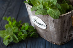 Fresh mint leaves herb. selective focus, copy space Stock Photo