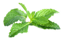 Fresh mint leaves isolated Royalty Free Stock Photo