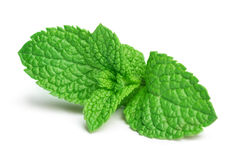 Fresh mint. Leaves isolated on white background royalty free stock image