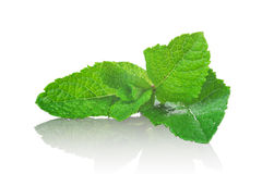 Fresh mint leaves isolated Stock Photos