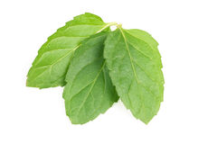 Fresh mint leaves isolated on white background Royalty Free Stock Images