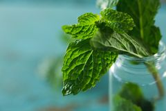 Fresh mint leaves in jar Stock Photos