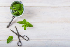 Fresh mint leaves in an old drainer. And a pair of scissors Royalty Free Stock Photography