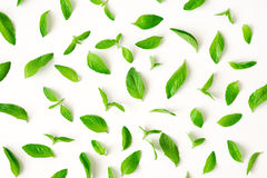 Fresh mint leaves pattern Stock Images