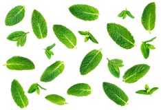 Fresh mint leaves pattern isolated on white background, top view. Close up of peppermint, lemon balm royalty free stock photos