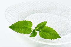 Fresh mint leaves on plate Royalty Free Stock Image