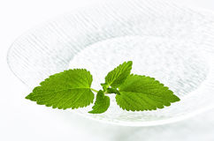Fresh mint leaves on plate Royalty Free Stock Photos