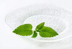Fresh mint leaves on plate Royalty Free Stock Photo