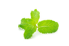 Fresh mint leaves. Royalty Free Stock Photography