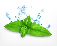 Fresh mint leaves. With water splash. Vector icon. EPS10 stock illustration